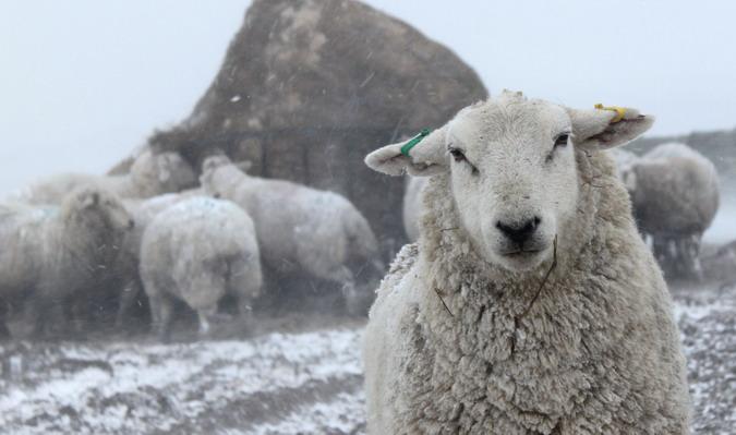 Winter feed, Tan-y-garth Farm