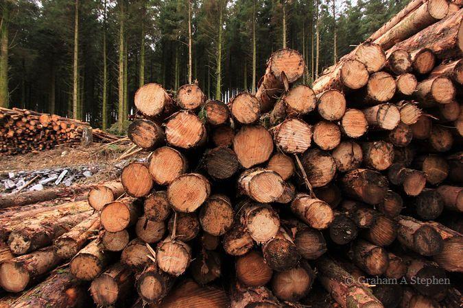 Hafod-y-wern Forest