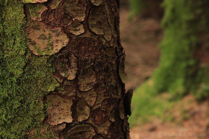 Garreg-fawr Forest