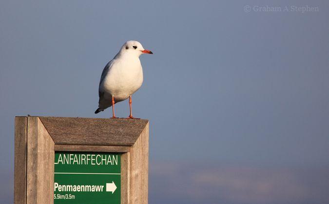 'Penmaenmawr 5.5km'