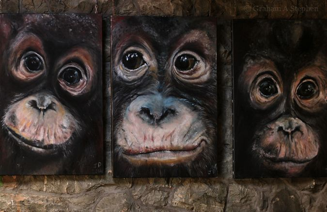 A simian triptych.  Artwork by Jacha Potgieter on display in the café.
