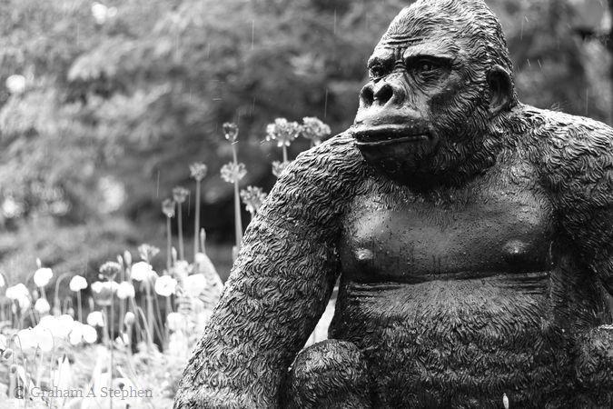 Gorilla sculpture outside the Alpine Coffee Shop