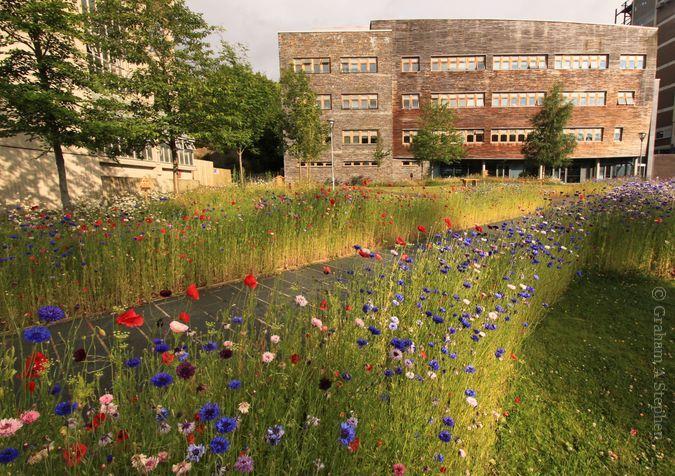 Environment Centre Wales, Bangor