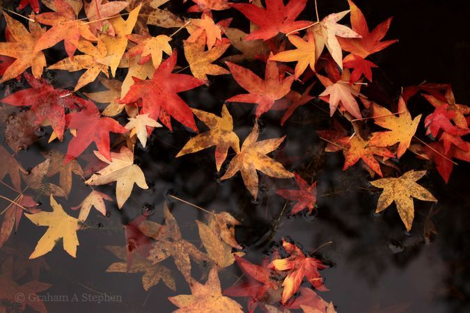 Bodnant Garden, October 2015