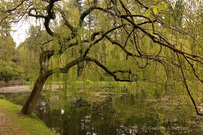Bodnant Garden