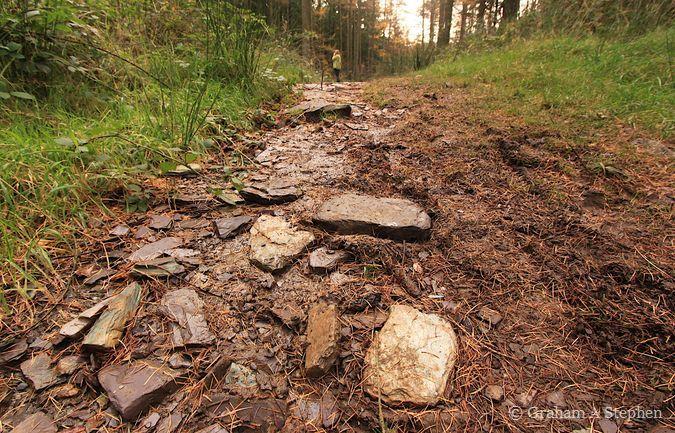 Path II